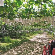 果実の森公園